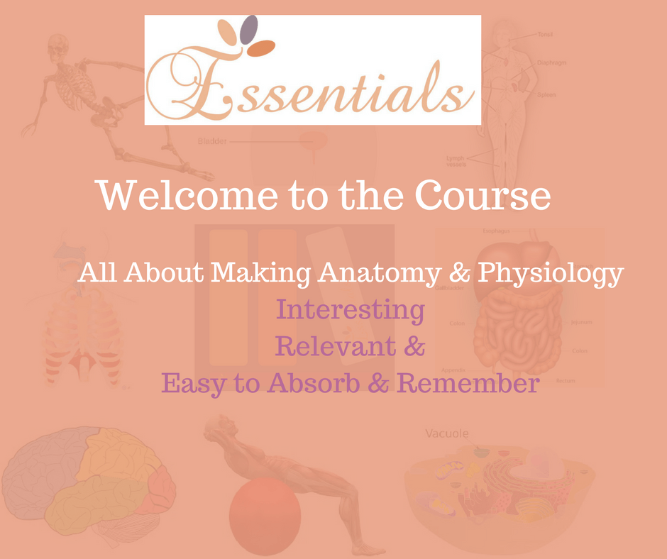 Online Anatomy and Physiology Course - Essentials Holistic